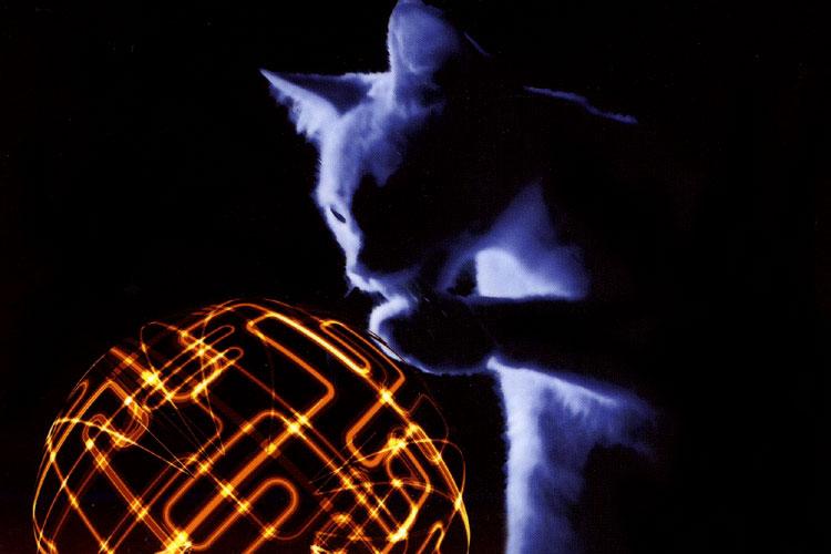 Schrödingers kat speelt met zijn leven
