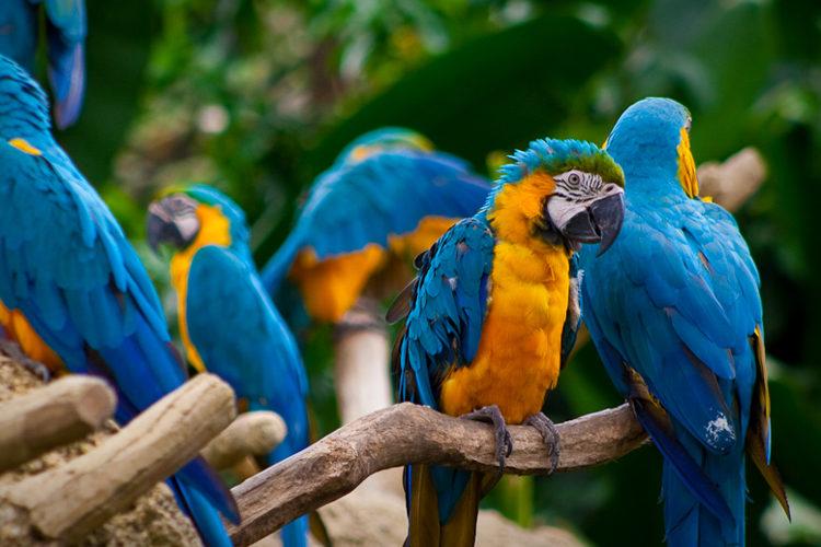 De Stellingchecker gaat papegaaiende politici achter de broek zitten (foto:flickr/arist)