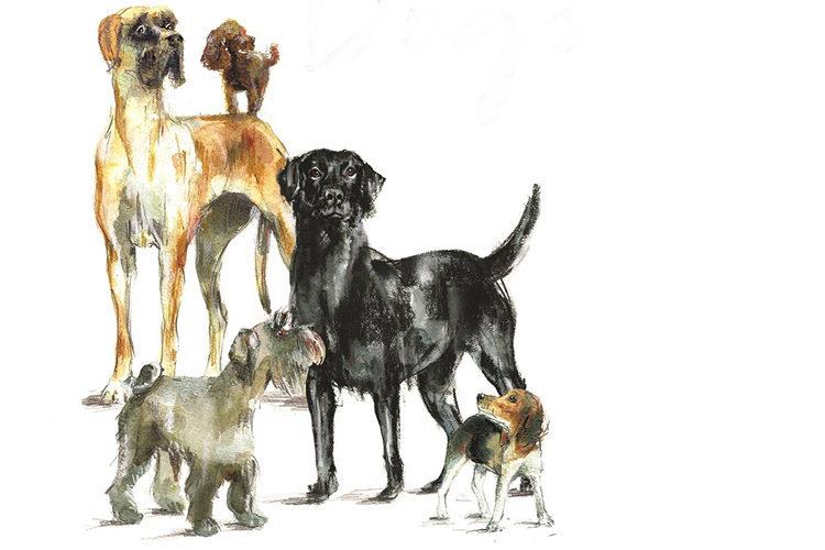 André Alexis - Vijftien honden op weg naar de dood