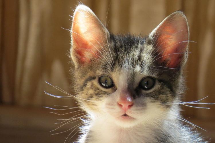 Takashi Hiraide geeft een kat de hoofdrol - of toch weer niet (foto:flickr/25890105@N02)