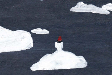 Nenad Joldeski: Ieder zijn eigen meer